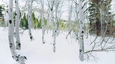 Winter_8K_32_500px