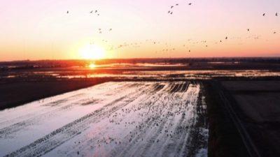 Birds 08